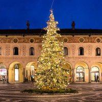 Albero di Natale Vero| Affitto Albero di Natale Vero| Noleggio Albero di Natale Vero